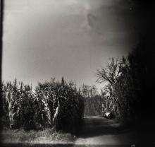 walk-through-reed